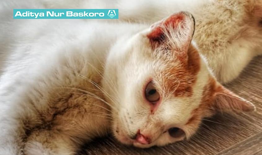 Apa-Manfaat-atau-Keuntungan-Memelihara-Kucing-dalam-Islam